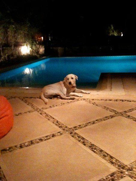 Missy My Dog